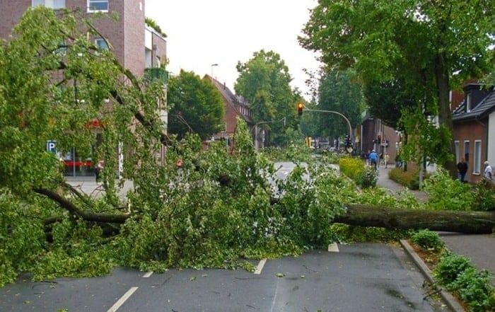 Tree down in street