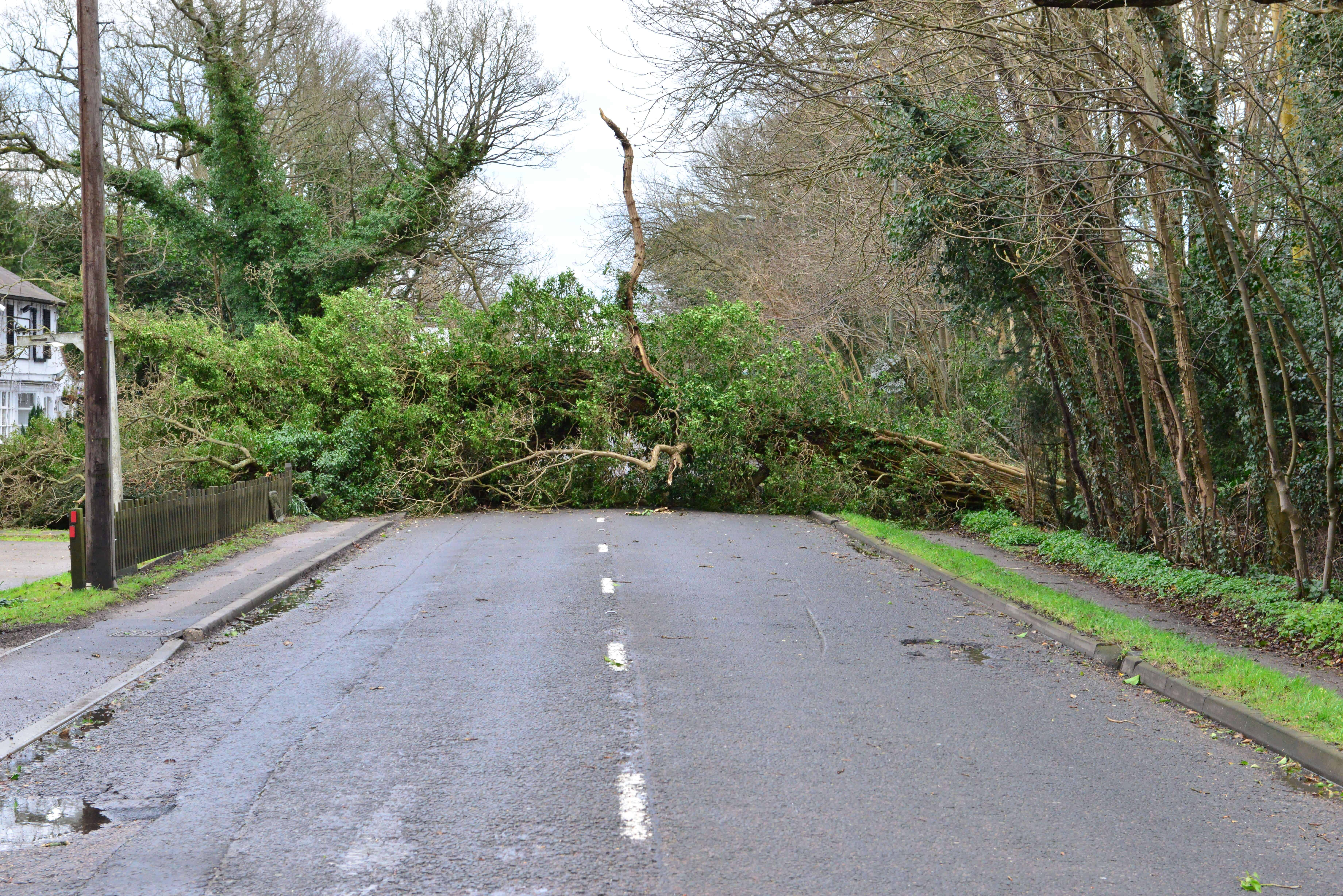 Tree Fallen into Road